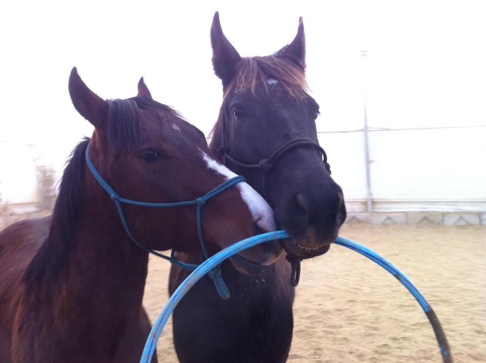 Centre d'Équitation - campt de jour équitation - formation et cours d'équitation