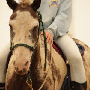 Monture à cheval d'une jeune lors du Camp de jour équitation à Laval