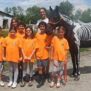 Expérience de groupe de jeune au Camp de jour équitation à Laval