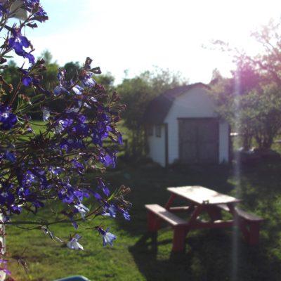 camp__bonanza15