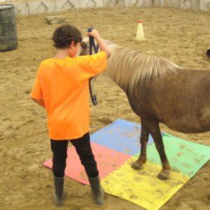 Apprendre et comprendre un cheval au Camp de jour d'équitation à Laval