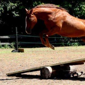 Magnifique saut de cheval au camp de jour d'Équitation à Laval