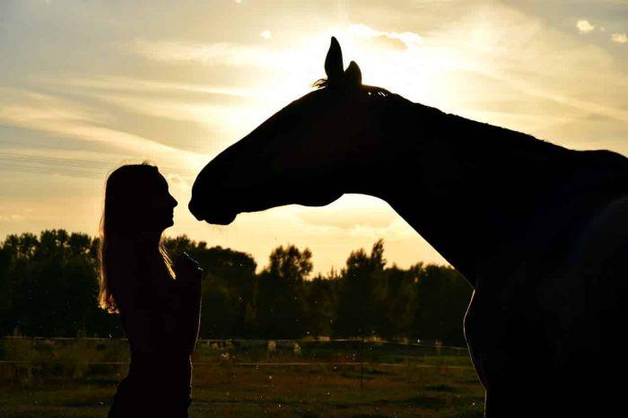 Centre d'équitation à Laval - Formation et Camp de jour