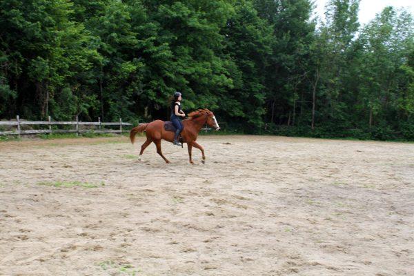 Cours d'équitation pour enfants et adultes, en groupe et individuel